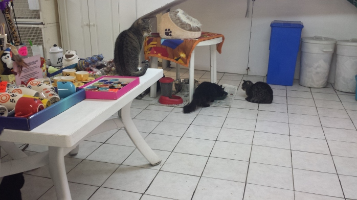 Inside the cat sanctuary.